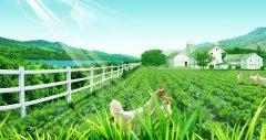 """农业部:八类农产品将插上大数据""""翅膀"""""""